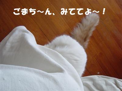 c0195250_1741247.jpg