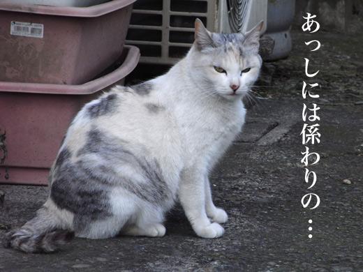 c0147123_20273833.jpg