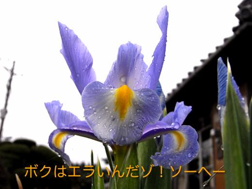 c0147123_21583082.jpg