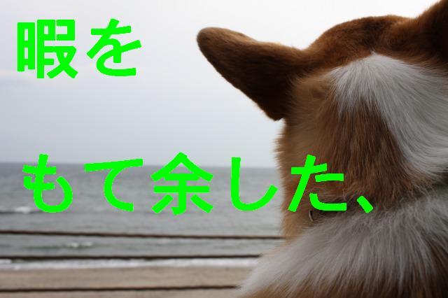 c0173042_2555610.jpg