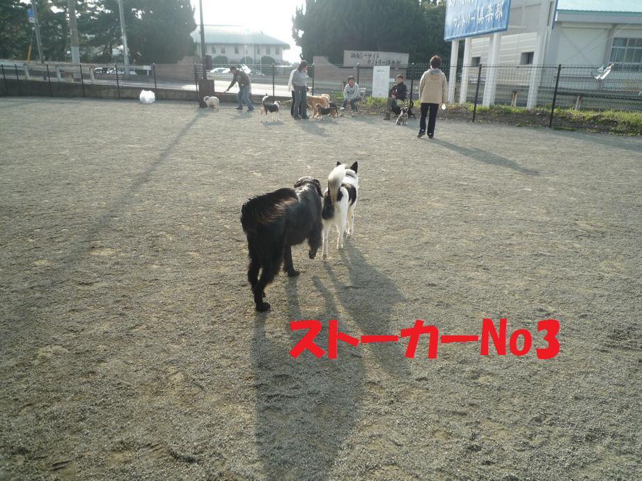 a0104464_11343660.jpg