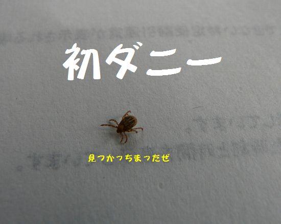 a0100564_183207.jpg