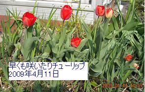 a0021554_15175698.jpg