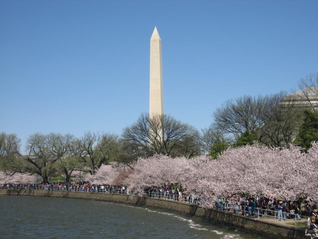 NAVER まとめ【日米】ワシントンにて桜祭りが開幕【友好】