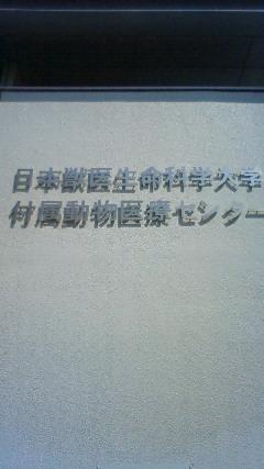 e0046305_1056246.jpg
