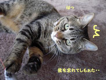 c0139488_02001.jpg
