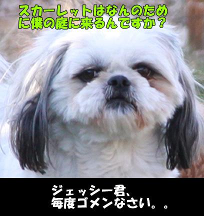 c0164491_1121451.jpg