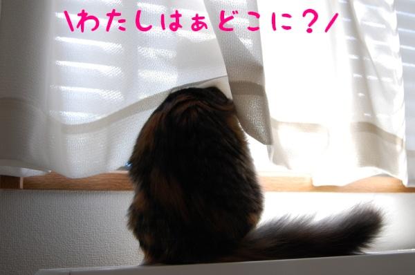 c0181639_12569.jpg