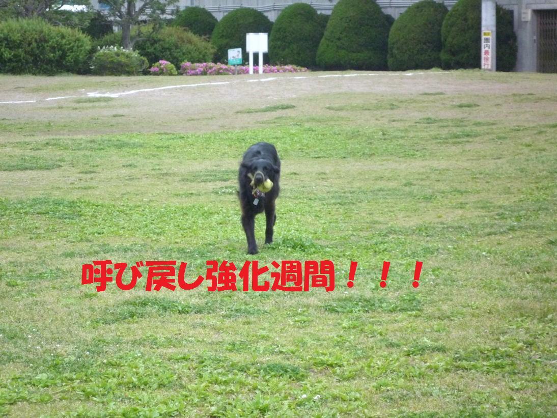 a0104464_1421195.jpg
