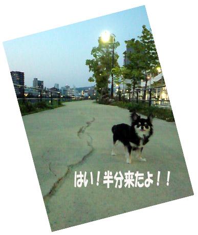 e0177509_065243.jpg
