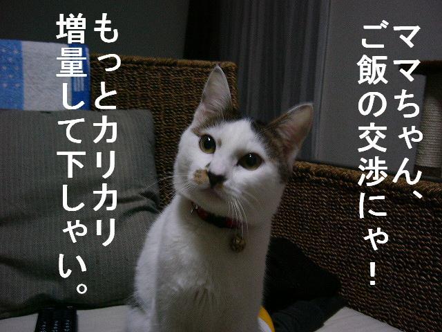 e0171996_842324.jpg