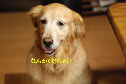 e0020166_2011573.jpg