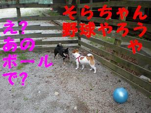 c0188294_21593178.jpg