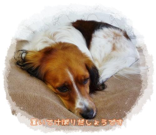c0174773_1045988.jpg