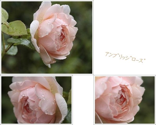 a0079880_17294318.jpg