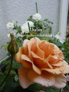 c0178855_13103870.jpg