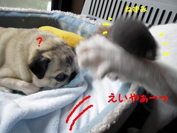 c0139488_16523695.jpg
