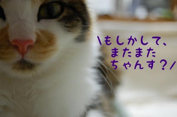 c0181639_1823432.jpg