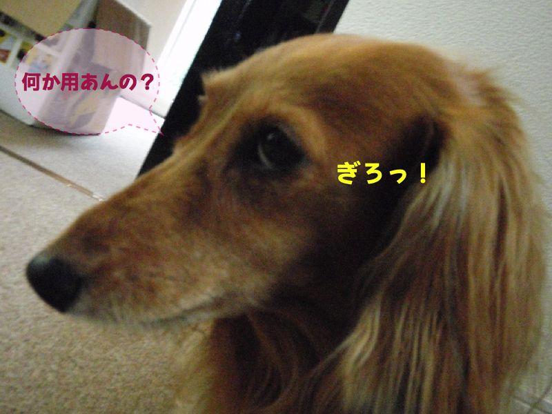 c0121550_18551796.jpg