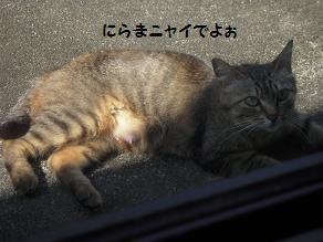 c0139488_10144237.jpg