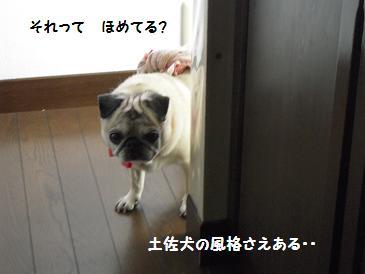 c0139488_9534927.jpg