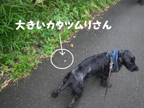 a0100721_2329431.jpg