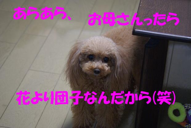 a0101143_1941911.jpg