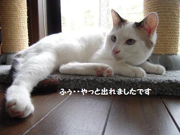 c0139488_1142735.jpg