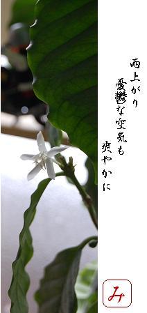 c0159986_872268.jpg