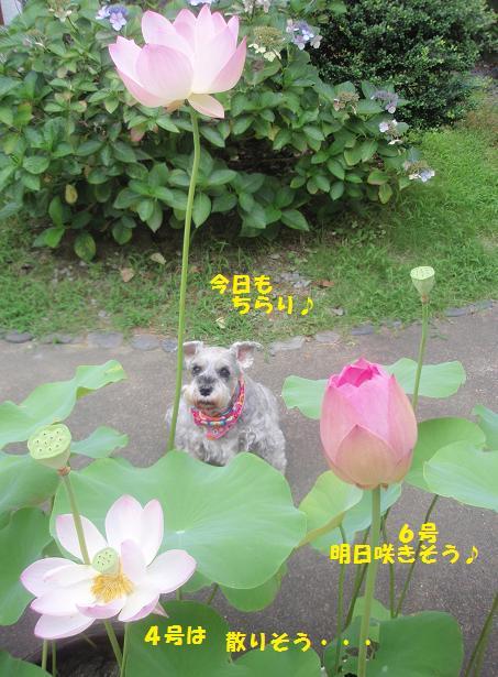 c0098501_18125411.jpg