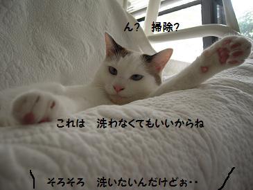 c0139488_940014.jpg