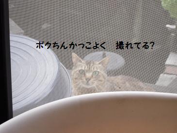 c0139488_9464921.jpg