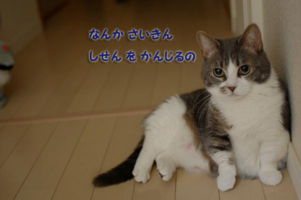 c0188875_9512969.jpg