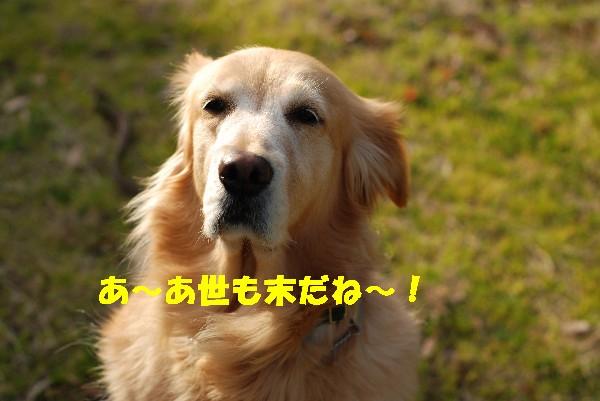 e0020166_7331953.jpg