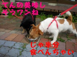c0188294_166081.jpg