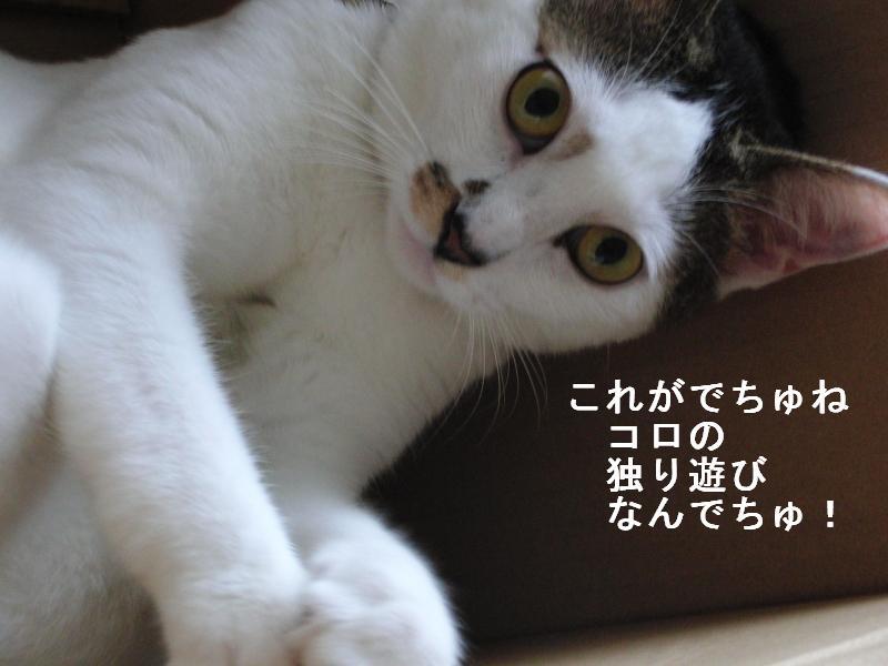 e0171996_655262.jpg