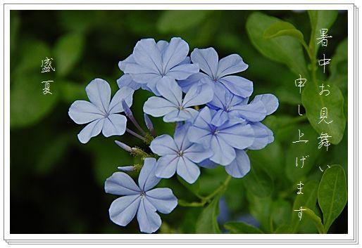 a0058167_1345199.jpg