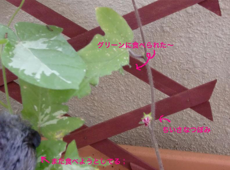 a0109467_1584851.jpg