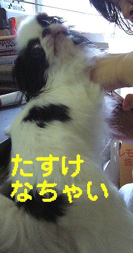 c0199014_17565858.jpg