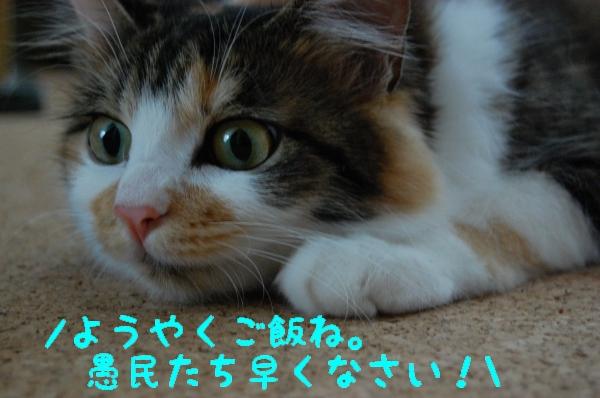 c0181639_16473122.jpg