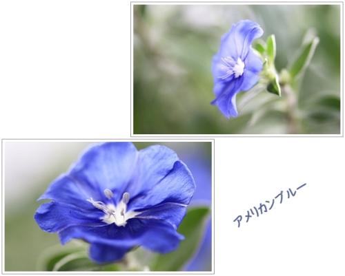 a0079880_20561284.jpg