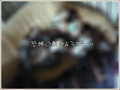 c0132121_187873.jpg