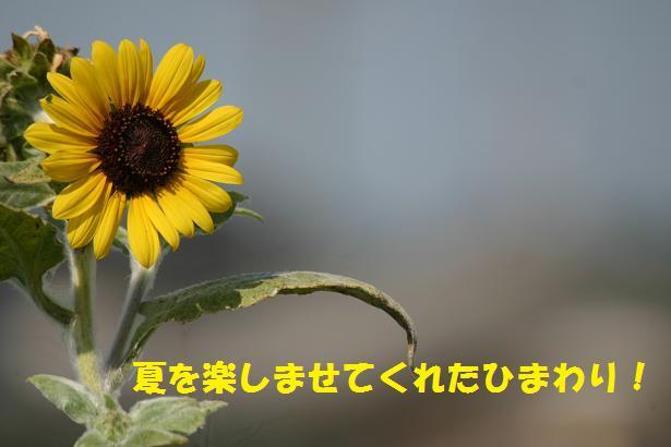 a0037298_2211899.jpg