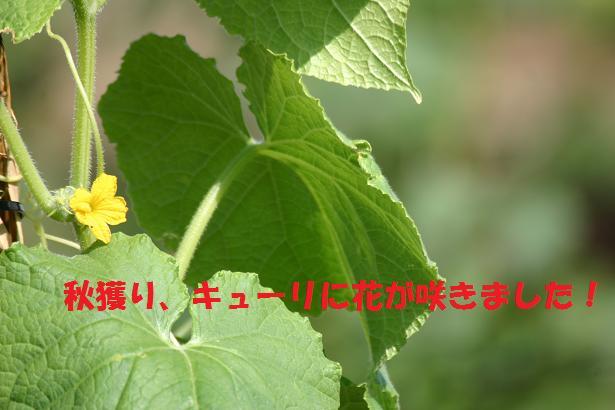 a0037298_221417.jpg