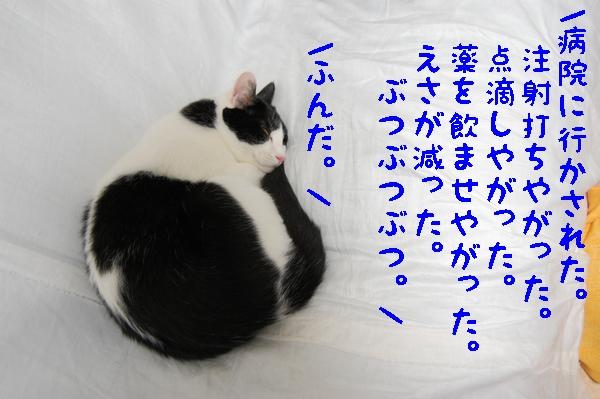 c0181639_165874.jpg