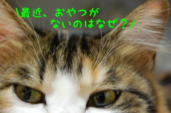 c0181639_1422010.jpg