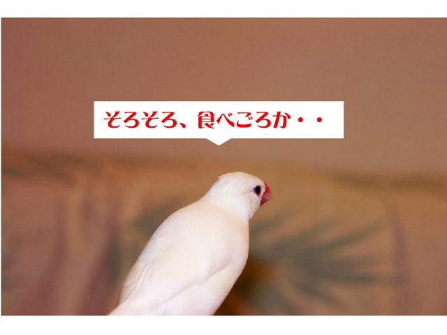 a0019545_16331738.jpg
