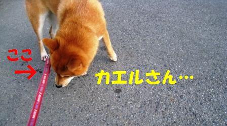 c0171368_2048139.jpg