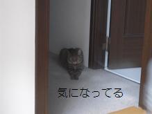 c0139488_105569.jpg