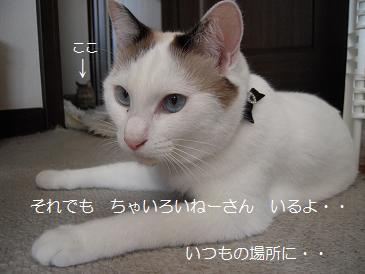 c0139488_036341.jpg